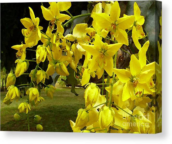 Golden Shower Tree Canvas Print featuring the photograph Golden Shower Tree by James Temple