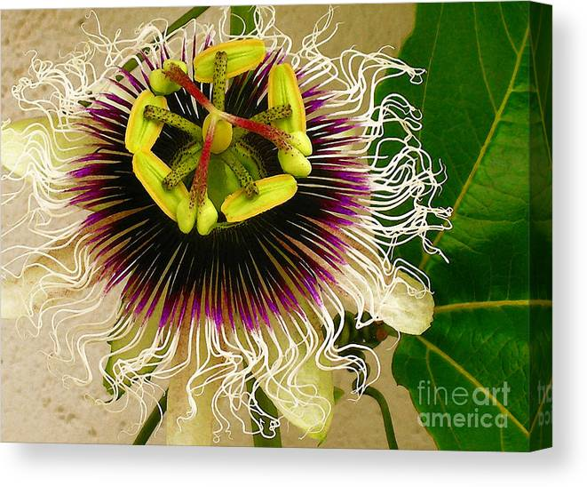 Passion Fruit Flower Canvas Print featuring the photograph Hawaiian Lilikoi by James Temple