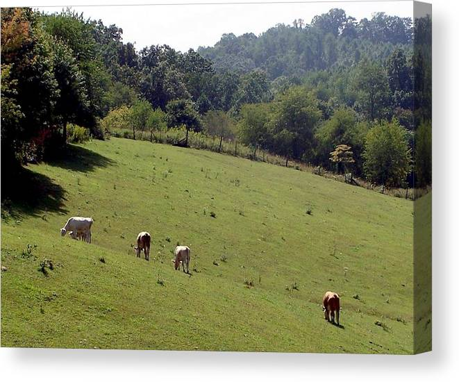 Nature Canvas Print featuring the photograph Hillside Grazing by Cumberland Studios
