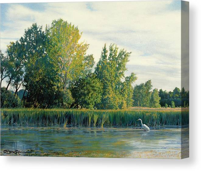 Great Egret Canvas Print featuring the drawing North of the Grade-Great Egret by Bruce Morrison