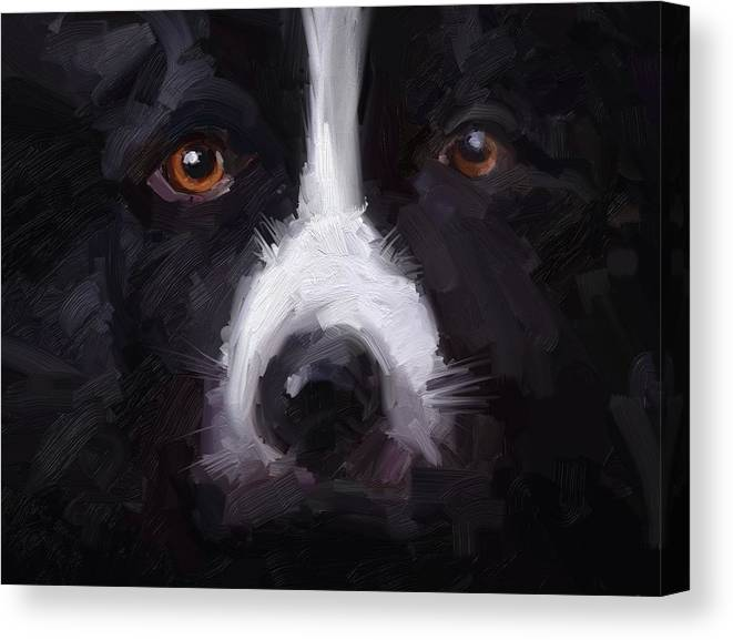 Border Collie Dog Sheepdog Stare Canvas Print featuring the digital art The Stare by Scott Waters