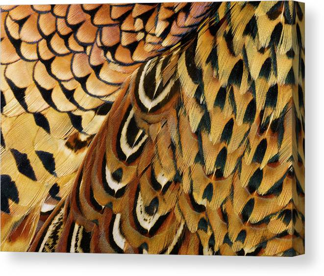 Orange Color Canvas Print featuring the photograph Detail Of Pheasant Feathers by Jeffrey Coolidge