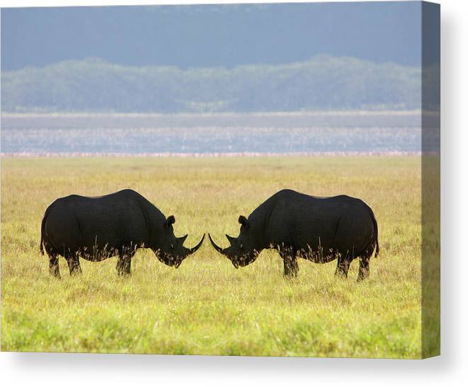 Animal Themes Canvas Print featuring the photograph Two White Rhinoceros Face To Face On by Grant Faint