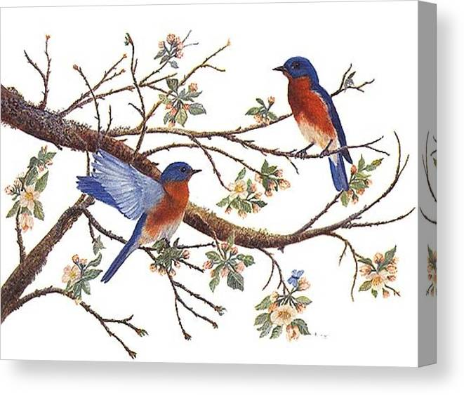 Bluebirds Canvas Print featuring the painting Bluebirds And Apple Blossoms by Ben Kiger