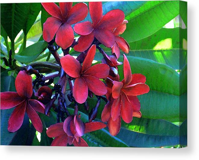 Hawaii Canvas Print featuring the photograph Burgundy Plumeria by James Temple