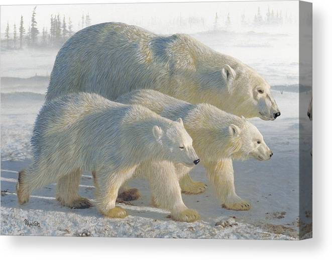 Polar Bear Canvas Print featuring the drawing A Chill Wind by Brent Ander