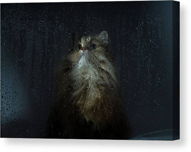 Pets Canvas Print featuring the photograph Cat By Rainy Window by Benjamin Torode