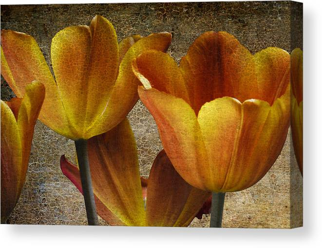 Four Canvas Print featuring the photograph Four Tulips by Keith Gondron