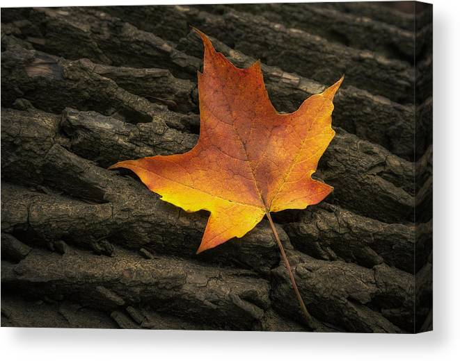 Maple Canvas Print featuring the photograph Maple Leaf by Scott Norris