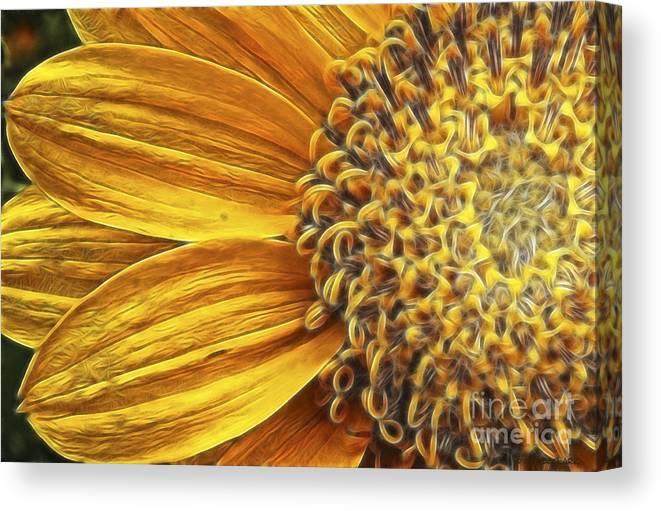 Dahlia Canvas Print featuring the photograph Rays Of Sunshine by Beve Brown-Clark Photography