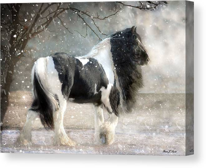 Horse Photographs Canvas Print featuring the photograph Solitary by Fran J Scott