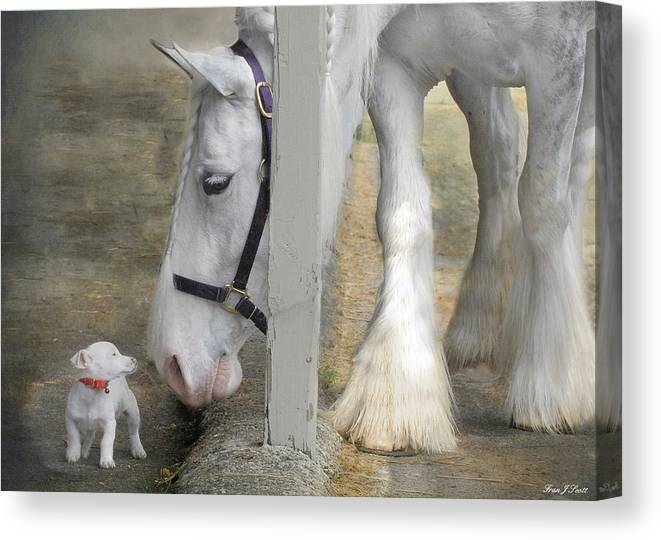 Horses Canvas Print featuring the photograph Sparky and Sterling Silvia by Fran J Scott