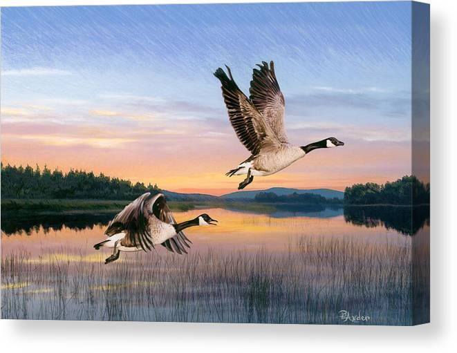 Geese Canvas Print featuring the drawing Taking Flight by Brent Ander