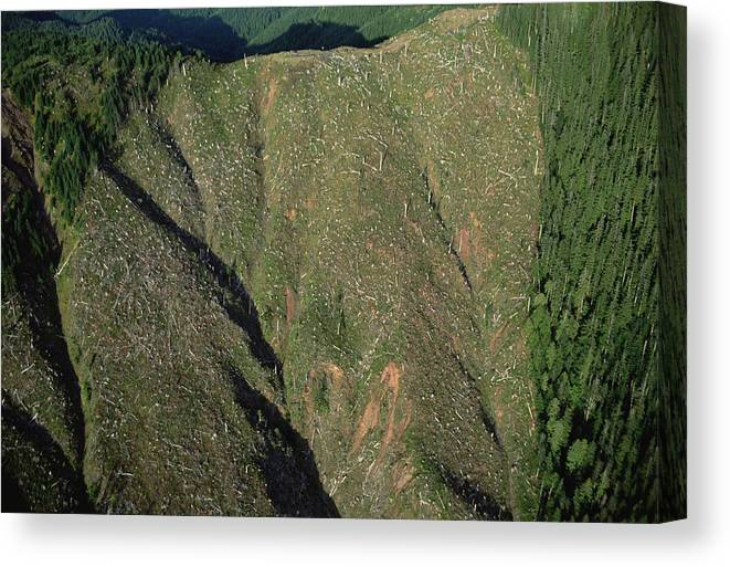 Mp Canvas Print featuring the photograph Clear Cutting, Olympic National Park by Mark Moffett