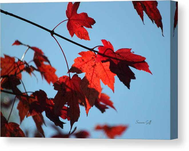 Leaf Canvas Print featuring the photograph A Time For Every Season by Suzanne Gaff