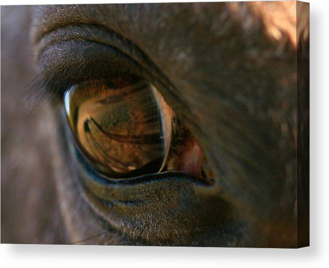 Shadow Canvas Print featuring the photograph Beauty Is In the Eye of the Beholder by Angela Rath