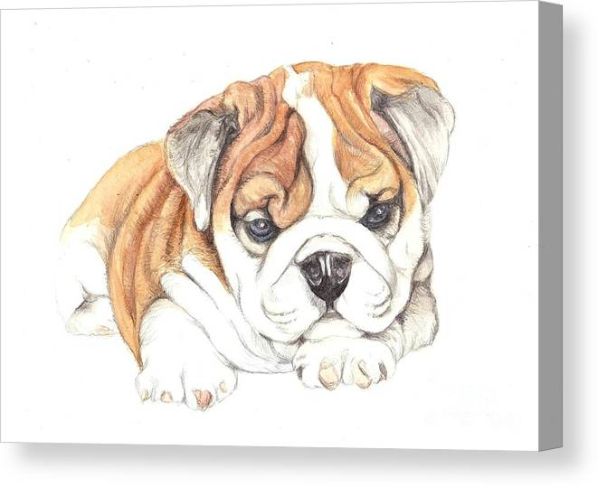 Brittish Canvas Print featuring the painting British Bulldog Puppy by Morgan Fitzsimons