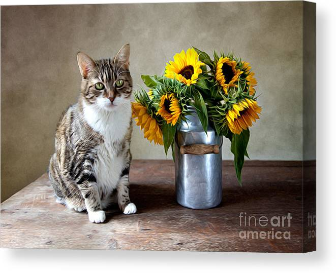 Cat Canvas Print featuring the painting Cat and Sunflowers by Nailia Schwarz