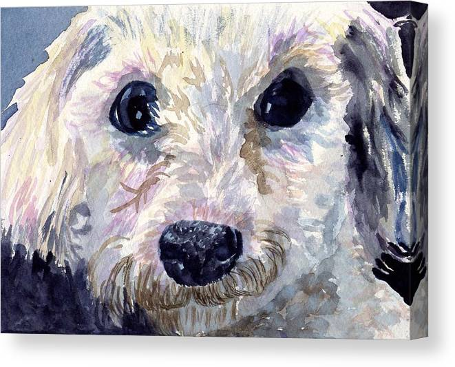 Bichon Frise Canvas Print featuring the painting Did You Say Lunch by Sharon E Allen