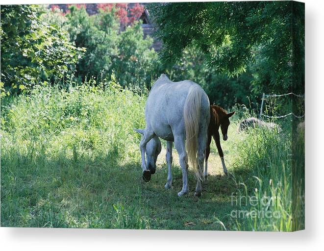 And Canvas Print featuring the photograph Giverny Mare And Foal Landscape by Nadine Rippelmeyer