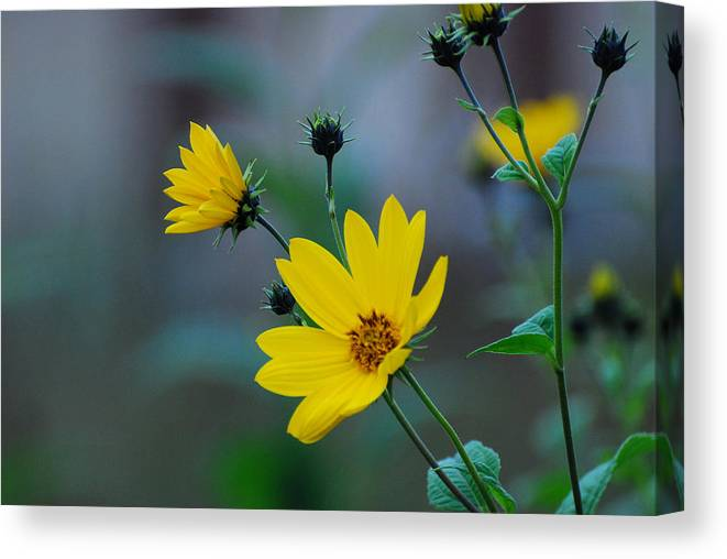 Herb Canvas Print featuring the photograph Herb by Adrian Bud