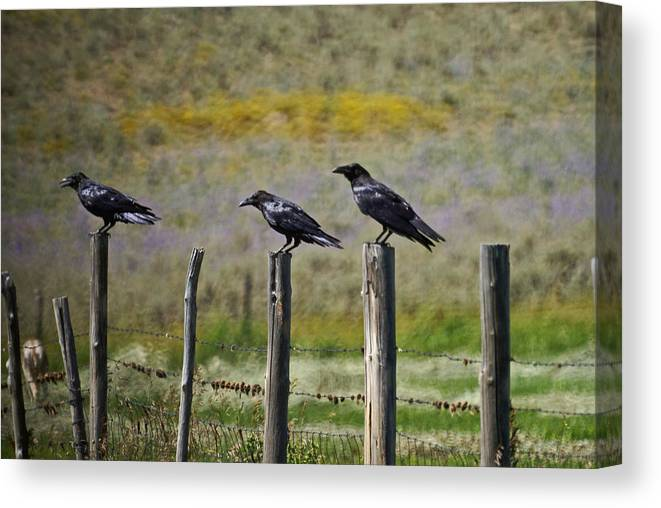 Crows Canvas Print featuring the photograph Neighborhood Watch Crows by Heather Coen