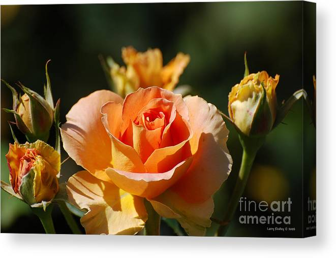 Flowers Canvas Print featuring the photograph O range-ment by Larry Keahey