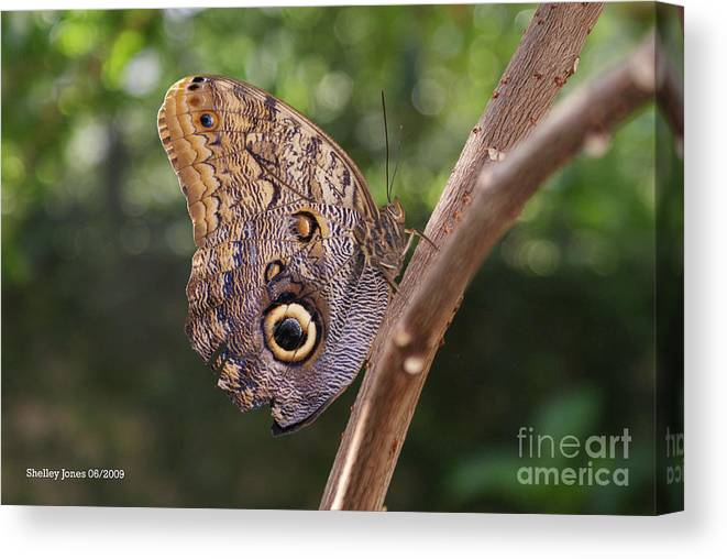 Butterfly Canvas Print featuring the photograph Owls don't always have feathers by Shelley Jones
