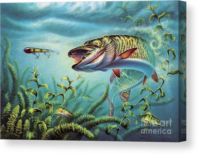 Muskie Canvas Print featuring the painting Provoked Musky by JQ Licensing