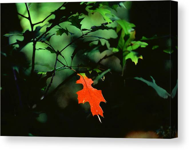 Show Off Canvas Print featuring the photograph Show Off by Bill Morgenstern