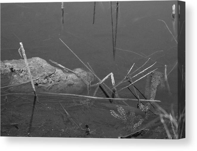 Black And White Canvas Print featuring the photograph Spider In Water by Rob Hans