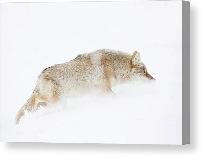 Winter Canvas Print featuring the photograph Surviving by Nigil Haroon