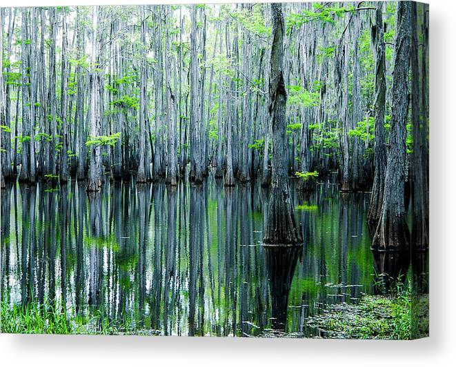 Algae Canvas Print featuring the photograph Swamp in Louisiana by Ester McGuire