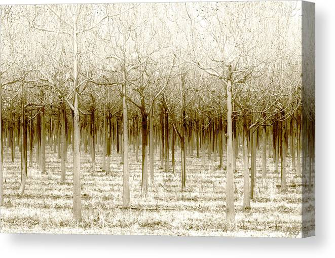 Landscape Canvas Print featuring the photograph The Forest for the Trees by Holly Kempe