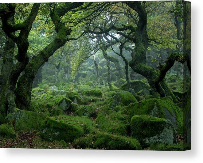 Tranquility Canvas Print featuring the photograph Padley Gorge by Duncan Fawkes