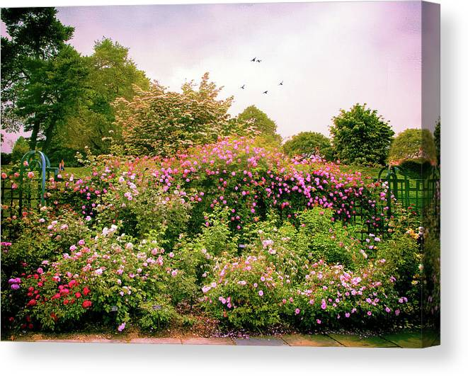 New York Botanical Garden Canvas Print featuring the photograph Rose Garden Greeting by Jessica Jenney