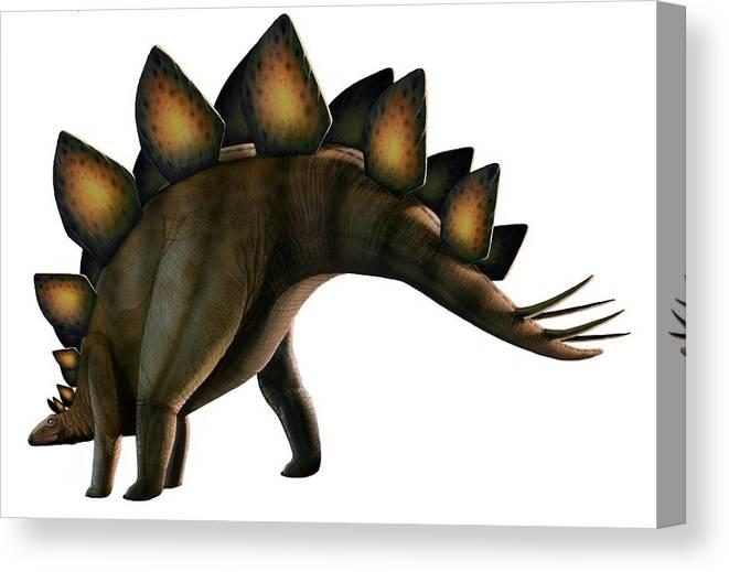 Jurassic Canvas Print featuring the digital art Artwork Of A Stegosaurus Dinosaur by Mark Garlick