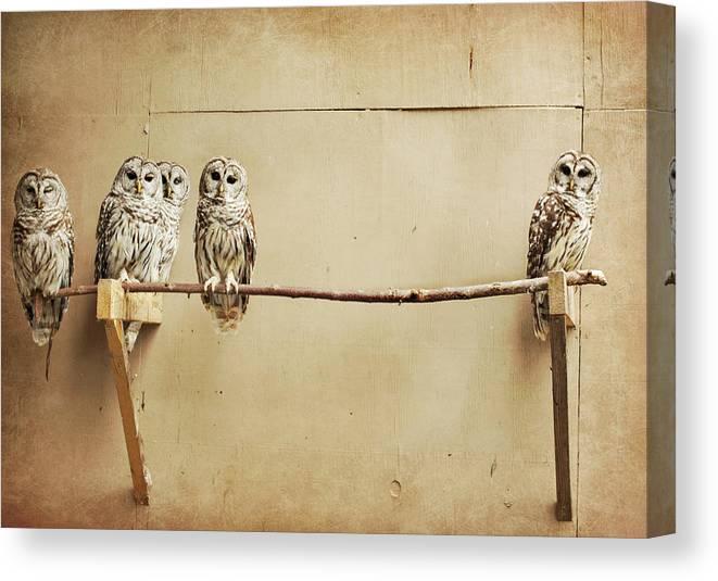 Scranton Canvas Print featuring the photograph Baby Barred Owls by Tara Reifenheiser