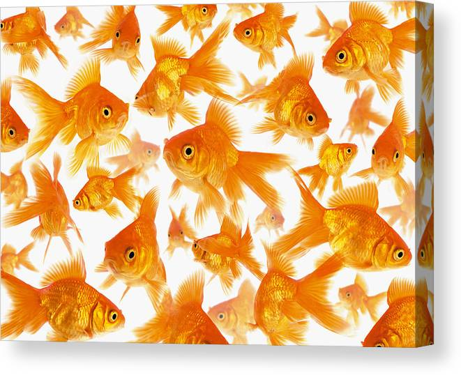 Orange Color Canvas Print featuring the photograph Background Showing A Large Group Of by Cocoon