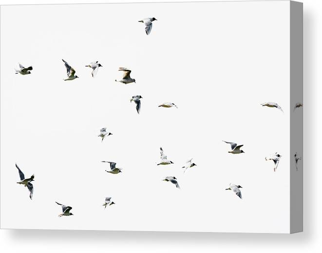 England Canvas Print featuring the photograph Birds In Flight by Magnusson, Roine