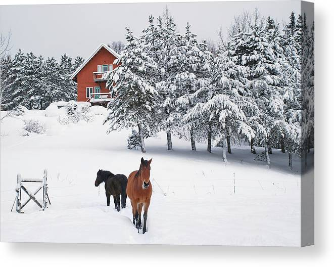 Horse Canvas Print featuring the photograph Black And Brown Horse by Anne Louise Macdonald Of Hug A Horse Farm