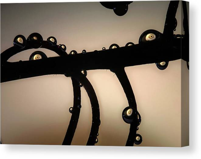 Macro Canvas Print featuring the photograph Eyes Up by Jim Painter