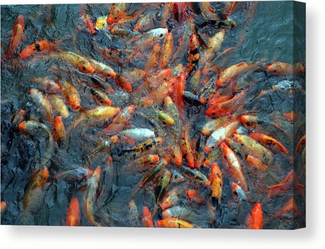 Underwater Canvas Print featuring the photograph Fish Fight by Thomas Carroll