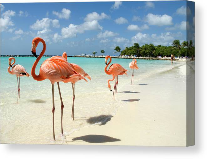 Shadow Canvas Print featuring the photograph Flamingos On The Beach by Vanwyckexpress