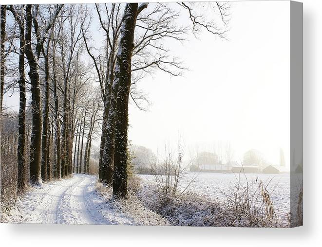 Tranquility Canvas Print featuring the photograph Half Black, Half White by Bob Van Den Berg Photography