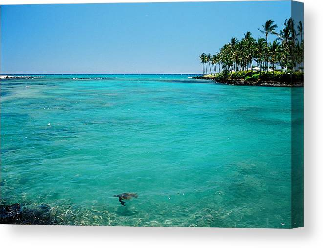 Water's Edge Canvas Print featuring the photograph Underwater Turtle In Maui Hawaii Resort by Ejs9