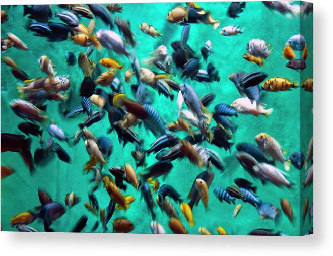 Underwater Canvas Print featuring the photograph Various Multi-colored African Fish by By Ken Ilio