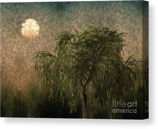 Willow At Sunset Canvas Print featuring the digital art Willow at Sunset by Looly Elzayat