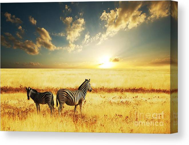 Zebra Canvas Print featuring the photograph Zebras At Sunset by Galyna Andrushko