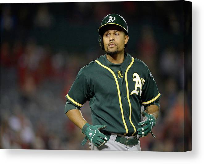 American League Baseball Canvas Print featuring the photograph Coco Crisp by Harry How